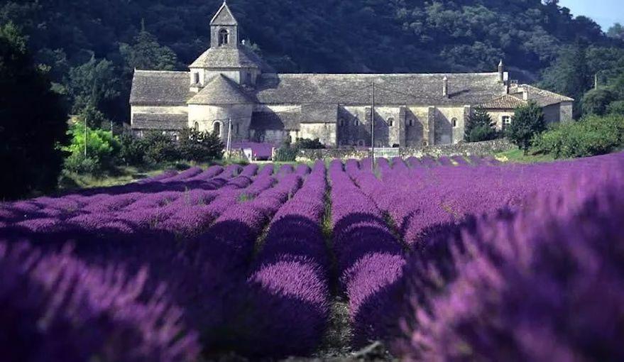 塞南克修道院(Abbaye Notre-Dame de Sénanque).jpeg